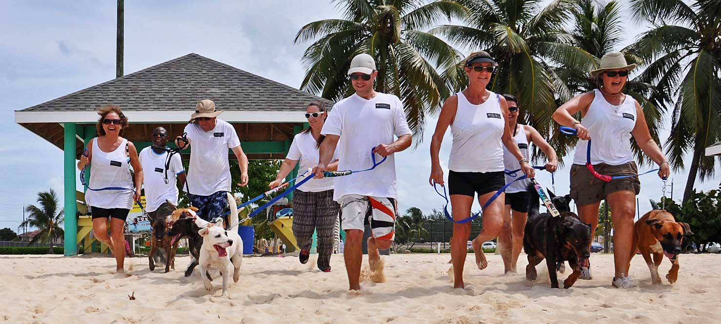 Dogs On Beach 2